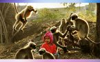 Mowgli of Karnataka : Meet the wonder boy whose bond with monkeys is unbelievable