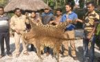 Belakoba Forest Range officers seize 10 Ft Long leopard skin, WATCH VIDEO
