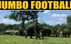 Ever seen elephants playing football?