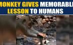 Monkey tries to fix a water leak by using dry leaves, video goes viral