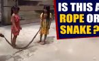 Vietnamese kids play with giant deadly snake
