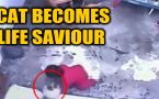 Cat saves toddler's life, video goes viral