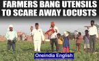 Locust attack: Farmers in Kanpur bang utensils, beat drums to scare away the locusts: Watch