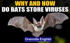 Covid-19, Nipah may have bats in common, why are viruses traced to them? We answer