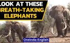 Look at these adorable elephant videos doing rounds on social media