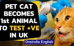 Coronavirus: Pet cat becomes first animal to test positive for COVID-19 in UK