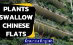 Chinese flats overrun with plants & mosquitoes