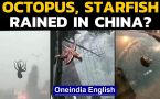 China: Sea creatures fell from the sky during a powerful storm, how did it happen
