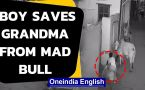 Boy saves grandmother from mad bull in Haryana