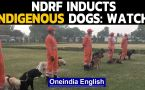 NDRF inducts 3 indigenous breed dogs for rescue operations: Watch the video