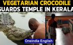 Kerala: Meet Babiya, a vegetarian crocodile who lives in the temple pond & loves rice