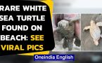 Rare white sea turtle baby found on at the South Carolina beach, pics go viral