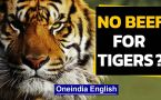 No beef for tigers, demands BJP leader Borah in Assam