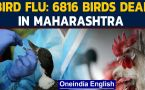 Maharashtra becomes an epicenter of bird flu: WATCH