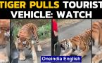 Tiger pulls safari vehicle by teeth | Viral video