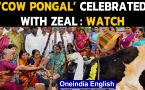 Cow Pongal celebrated with traditional dance and music in Coimbatore: Watch