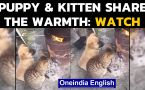 Cat & dog friends: Adorable video of duo keeping warm: Watch