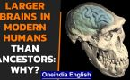 Human brains originated 1.7 million years ago in Africa