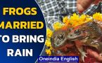 Tripura: Frogs married in unusual custom to appease the rain God