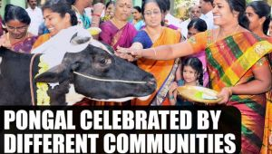 Pongal celebrated by different communities