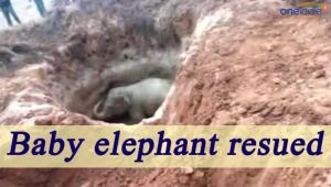Elephant rescued from dry well in Chhattisgarh, Watch Video
