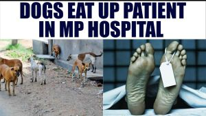 MP patient eaten up by Dogs in govt hospital