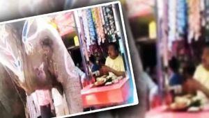 Elephant visits beetle shop everyday to eats its favorite paan