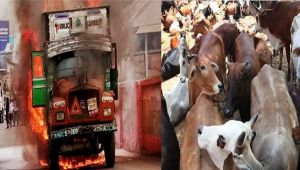 Cow vigilantism: Truck set ablaze in Odisha on suspicion of carrying beef