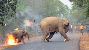 Hell is here : Award winning photograph captures humananimal conflict