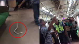 Man kills snake with bare hands on board a crowded train, Watch
