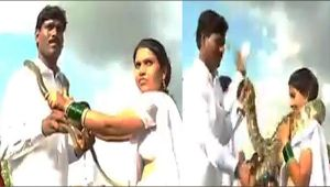 Maharashtra Couple tied knot by exchanging Snake Garland; Watch Video