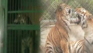 Kanpur Zoo use heaters to keep animals warm in cold weather, Watch