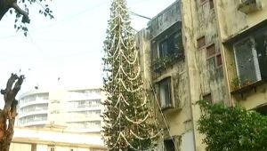 Mumbai family grows tallest Christmas tree, spread festive cheers , Watch Video