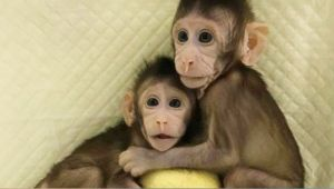 Monkey Cloning Successful  Step Towards Human Cloning?