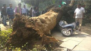 Delhi : Tree falls down infront of NGT building , no casualty reported