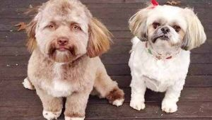 Dog who is human look-alike takes over internet