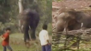Chhattisgarh : Wild Elephants enters the human Habitation, Wrecks Havoc