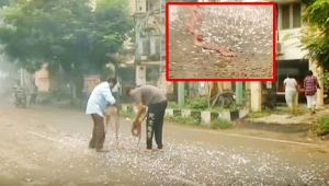 Chennai People burst crackers early morning adhering to Government Timeslots