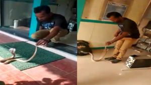 King cobra rescued from ATM centre in Tamil Nadu
