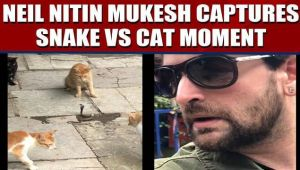 Neil Nitin Mukesh posts video showing four cats fight a snake, video viral
