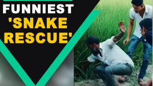 Man pulls out 'snake' from the field with a dramatic twist, video goes viral