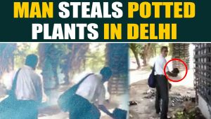 Old man caught on camera stealing potted plants in Delhi, video goes viral