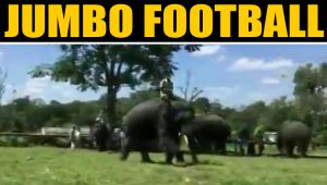 Ever watched Elephants playing football?