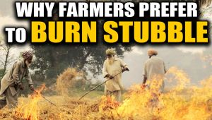 Delhi pollution: Why farmers prefer to burn agricultural residue