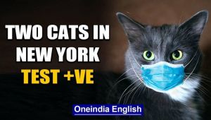 Two cats in New York are the first pets to test positive for Coronavirus in US