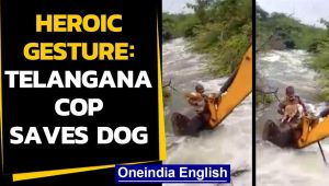 Telangana cop saves dog stuck in bushes across river bank: Watch the heroic act