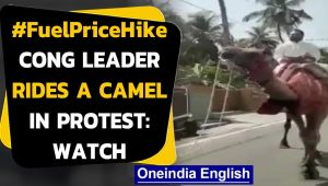 Fuel Price hike: Congress leader rides a camel in Andhra Pradesh as a mark of protest