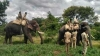 How the elusive tiger was caught using elephants and a dog in Karnataka's Bandipur