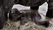 Assam floods spell disaster for Kaziranga animals