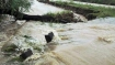 Sewage in Kosi: NGT slams U'khand govt for non compliance of order